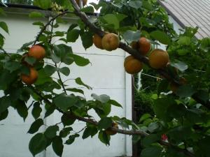 leczenie ziołami lecznicze ziół