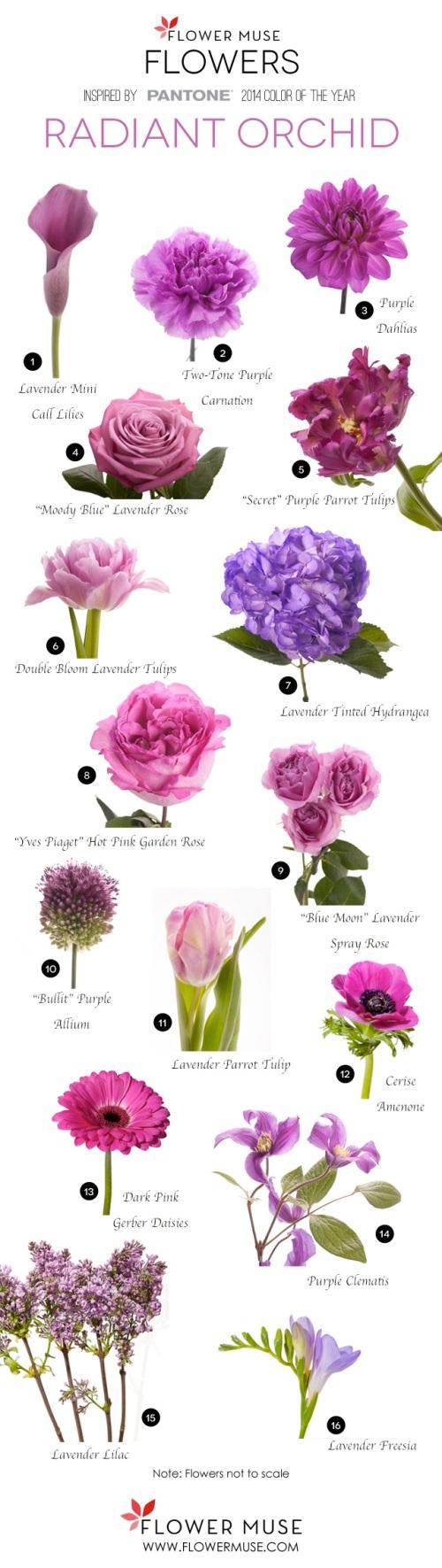 Credit: flowermuse.com