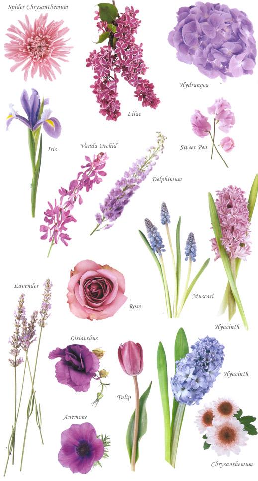 floral-blue
