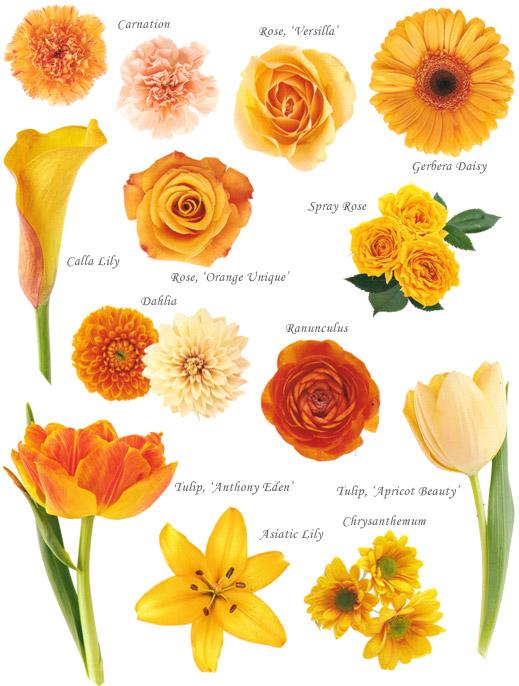 floral-orange